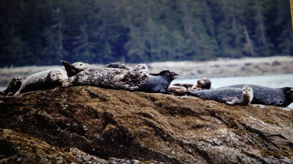 Seals out sun bathing!