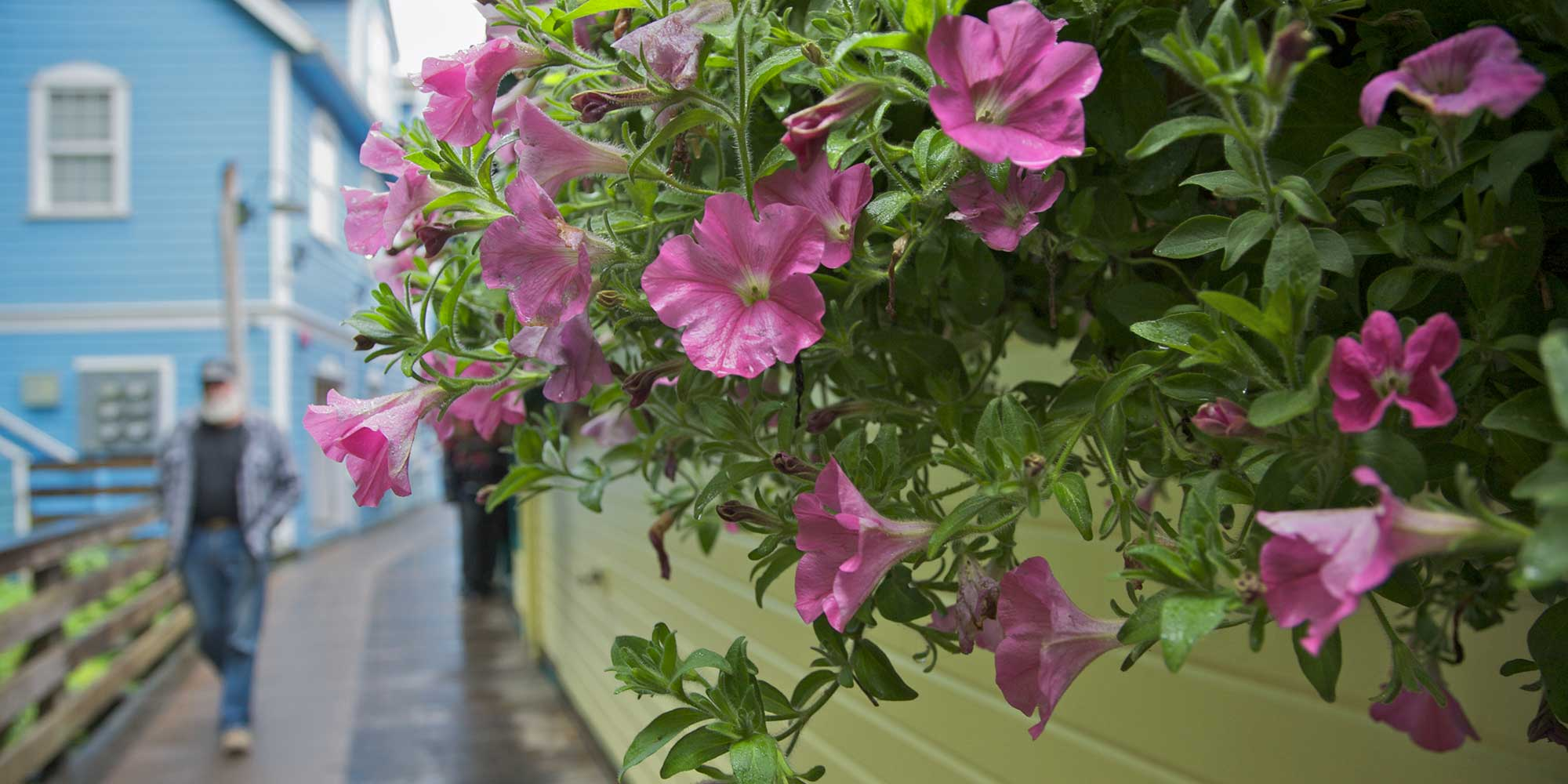flowers hanging over a sidewalk