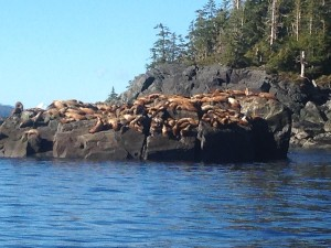 Fish and see the wildlife of Southeast Alaska