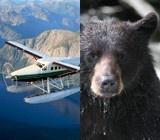 Bush Planes & Wildlife. Does it get any better?
